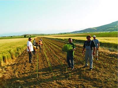 Πρόγραμμα Αγροτικής Ανάπτυξης
